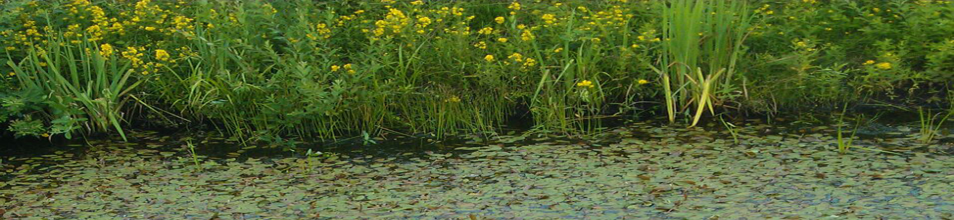 Hagedorn Waterplanten